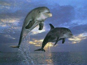 dolphins friends leaping twitter size